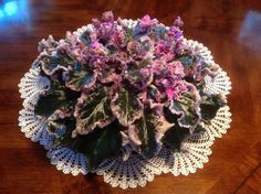 ~ African Violet ~ Wrangler's Gaudy Lady ~