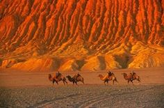 Camels on the Silk Road
