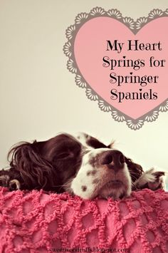 I. Love. My. Dog. :)  My Springer Spaniel Valentine.  Olivia was adopted through ESRA ~ English Springer Rescue America.  Tons in foster care, waiting for their forever homes.  Add one to your family.  :)  http://www.springerrescue.org/index.html