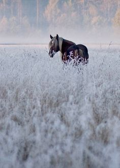Winter Mist- I can't explain the framed horse picture design the way I see it in my head. Definitely all me.                                                                                                                                                     More