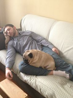 all curled up for a nap #pug
