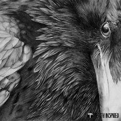 Buy Raven pencil drawing, Pencil drawing by Majda Susnik on Artfinder. Art Prints Online, Art Prints For Home, Wall Art Prints, Raven Bird, Crow Or Raven, Cheap Wall Art, Crow Art, Bird Art, Crows Ravens