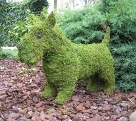 """I'd like to have a Scottie topiary as a centerpiece of a table. Imagine this on a buffet table!  I've also seen a Westie version of this topiary. You could spray paint the metal topiary in a vertigris finish and then glue moss over the frame.  I'd let the vertigris peek through in a few places. Just Google """"Scottie Topiary"""" or """"Westie Topiary"""", and I'm sure you will find a source."""