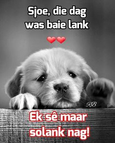 Good Night Wishes, Good Night Sweet Dreams, Good Morning Good Night, Good Night Quotes, Giant Animals, Afrikaanse Quotes, Goeie Nag, Christian Messages, Special Quotes