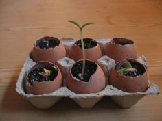 """So cool.   """"These biodegradable eggshell planters are perfect for starting seeds!    When the plants get too big for the shells, you can transplant them straight to the soil, shell and all."""""""
