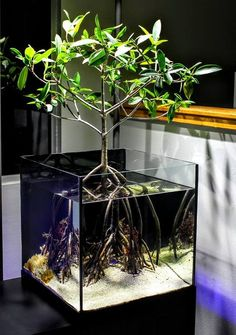 45 Stunning Aquarium Design Ideas for Indoor Decorations - Page 16 of 45 - SooPush - aquascaping Aquarium Design, Home Aquarium, Reef Aquarium, Aquarium Fish Tank, Goldfish Aquarium, Planted Aquarium, Aquarium Terrarium, Terrarium Tank, Aquariums Super