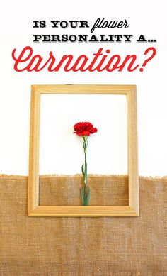 #lonestarliving Are you a  Carnation flower? You tend to be genuine and down-to-earth. Your friends seek your guidance and advice as you're practical and realistic. You like the simple things in life and fear big changes, however you  unique sense of style. Share with us your flower personality for a chance to win $100 VISA gift card.