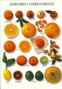 I try to eat citrus fruit as a snack. It's good for your metabolism! L'art Du Fruit, Fruit Art, Fresh Fruit, Fruit Water, Fruit Salad, Photo Fruit, Fruit Picture, Fruit Recipes, Healthy Recipes