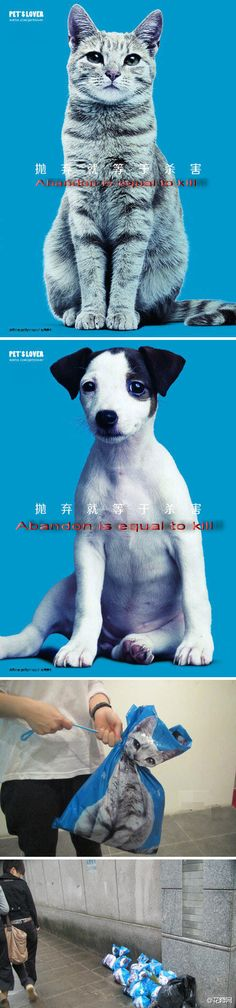 #Pet's lover Innovative design#  Care for life ! Abandon is equal to kill.Pay attention to stray animals, if not being kind to it, please don't hurt. Duosen publicity. http://www.duosenfashion.com/ From #花瓣http://huaban.com/ #pets #dogs #cats #animals #socute