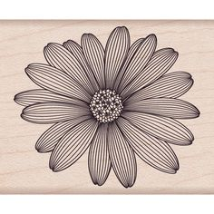 "Hero Arts Mounted Rubber Stamps 4""X1""-Etched Daisy 