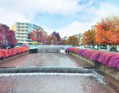 Trikala city in western Thessaly Litheos river here According to Greek mythology, born Asclepius, god of Health and Medicine. Seasons Of The Year, Greece Travel, Online Courses, Explore, City, Places, Outdoor Decor, Greek Mythology, Rivers