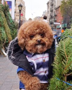 Super Cute Puppies, Cute Dogs And Puppies, Baby Dogs, Baby Puppies, Funny Animal Videos, Funny Animal Pictures, Animals And Pets, Funny Animals, Hipster Dog