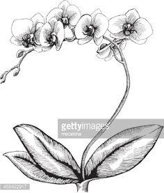 Orchid, Ink Style - vector drawing