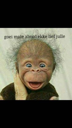 Good Morning Good Night, Good Morning Wishes, Good Morning Quotes, Sheep Cartoon, Afrikaanse Quotes, Goeie More, Morning Greetings Quotes, Funny Bunnies, Morning Pictures