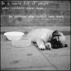 please pass this message on....there are so many people and animals in need of help....