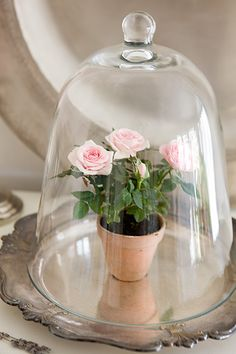Cloche party on pinterest bell jars glass domes and for Rose under glass