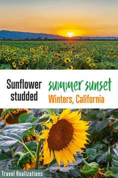 I visited Winters in California in July, one late afternoon to witness a sunflower studded summer sunset. Needless to say, every picture that I captured through my camera is like poetry in a frame. If you live in and around the San Francisco Bay Area, then these fields of blooming sunflowers in Winters are a must-see. #Sunflowerfields #California #Sunflowers #Winters #YoloCounty #visitcalifornia #sunflower #summer #wheregoodtimesgrow Amazing Destinations, Travel Destinations, Travel Usa, Canada Travel, Summer Sunset, Travel Guides, Travel Tips, United States Travel, California Travel