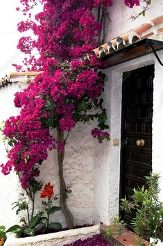 This is a must have in my backyard - nothing says 'California' to me like this beautiful plant except maybe palm trees - Bougainvillea 'Barbara Karst' Bougainvillea Trellis, Bougainvillea Wedding, Beautiful Home Gardens, Garden Arbor, Tropical Garden, Dream Garden, Backyard Landscaping, Porches, Shrubs