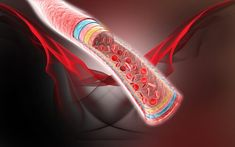 Las propiedades de algunas infusiones son buenas para mantener saludable la circulación sanguínea. Te compartimos las 5 mejores.
