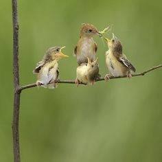 24 Outstanding Shots of Wildlife - Digital Photo Secrets : Digital Photo Secrets