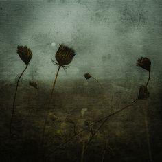 "Saatchi Online Artist Francesco Di Nocera; Photography, ""A Foggy Morning Limited Edition 3 of 10"" #art"