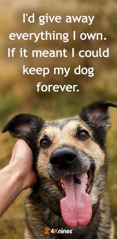 976 best inspirational dog quotes images in 2019 animales funny rh pinterest com
