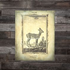Natural History Roebuck Deer Photo Poster Print 8x10 to 18x24 Dingy Creme