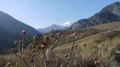 Around Saty Kazakhstan, Mountains, Nature, Travel, Naturaleza, Viajes, Trips, Nature Illustration, Outdoors
