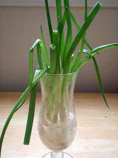 My scallions by joyosity, via Flickr