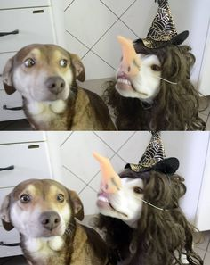 """""""Uh....Can you not?"""" """"What?? It's Halloween! Have some fun!"""" """".....Pls help....."""""""