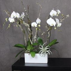 Double White Orchid with Xerographica Air Plant and Mossy Branches Orchid Plants, Air Plants, Indoor Plants, Silk Orchids, White Orchids, Send Flowers, All Flowers, White Branches, Orchid Arrangements