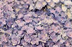 Hydrangea macrophylla 'You & Me Together' at New Covent Garden Flower Market New Covent Garden Market, Hydrangea Macrophylla, Flower Market, Pretty Flowers, Flower Power, You And I, Wedding Flowers, Marketing, Nature