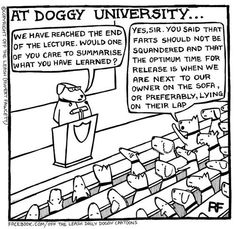 Doggy Universtity