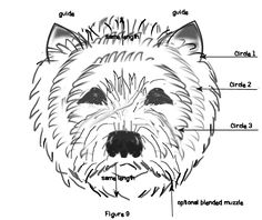 Shaping the Westie's head when stripping grooming