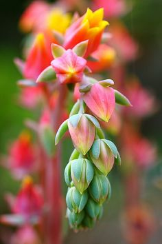 Secculent Flowers | Flickr - Photo Sharing!