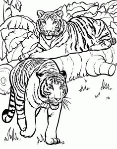 Tiger Coloring Pages and Book UniqueColoringPages Coloring
