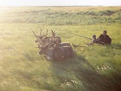 Nenets - sledging in the morning