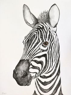 Buy Zebra portrait, Watercolour by Malgorzata Stepniak on Artfinder. Discover thousands of other original paintings, prints, sculptures and photography from independent artists. Watercolor Paintings Of Animals, Watercolor Artwork, Animal Paintings, Animal Drawings, Portrait Watercolour, Watercolor Paper, Original Paintings, Zebra Painting, Zebra Art