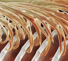 Science Image of Swallow feather detail (Hirundo sp.) from PS MicroGraphs. Specialists in Science Images. Scanning Electron Microscope, Science Images, Material Science, Macro And Micro, Patterns In Nature, Swallow, Natural Wonders, Macro Photography, Natural World