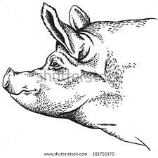 1000 images about pig drawings on pinterest pig drawing for Realistic pig coloring pages