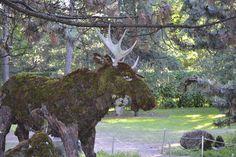 Trabalho de Val d'Or, Canadá,  - a partir desta cidade na maior área de vegetação no Canadá, criaturas da floresta boreal feitas de líquen (resistente à poluição) e musgos (resistente à seca). Mosaïcultures Internationales de Montréal 2013