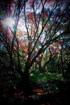 Maclay Gardens  Tallahassee, FL