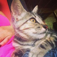 Uma gatinha que ainda não tem nome. Quem sabe Sabrina, Arya ou Audrey? Ainda não sei.