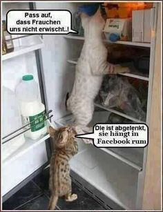 Take care that we do not catch a mother. This is - Lustige Tiere Hund - I Love Cats, Crazy Cats, Cute Cats, Funny Animal Pictures, Funny Animals, Cute Animals, You Funny, Funny Cute, Funny Pics