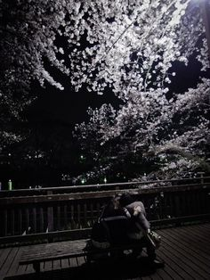 a photo i took of 2 young lovers in inokashira park in during cherry blossoms and April 11, Cherry Blossoms, Tokyo, Lovers, Japan, Park, Videos, Photography, Tokyo Japan