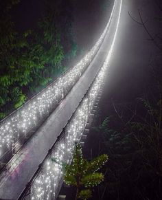 Canyon Lights Returns at the Capilano Suspension Bridge Park Vancouver British Colombia  Photograph By @theplaidshirt by nat.geography