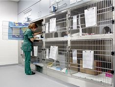 Willows Veterinary & Referral Service Cat Friendly Ward
