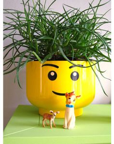Making a lego head flowr pot seems like a fun project and with the right plant in it a kool design.