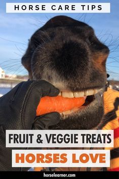 What fruit and vegetables can horses eat? And what can't they eat? Here we tell you what you can and can't feed your horse or give as a treat. Healthy Fruits And Vegetables, Kinds Of Vegetables, Horse Care Tips, Horse Riding Tips, Horse Facts, Horse Treats, Dental Problems, Reptile Cage, Reptile Enclosure