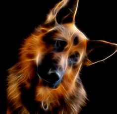 Spike the German Shepherd Cute Dogs Breeds, Dog Breeds, Beautiful Arabian Horses, Animal Wallpaper, Iphone Wallpaper, German Shepherd Dogs, German Shepherds, Love Pet, Baby Dogs